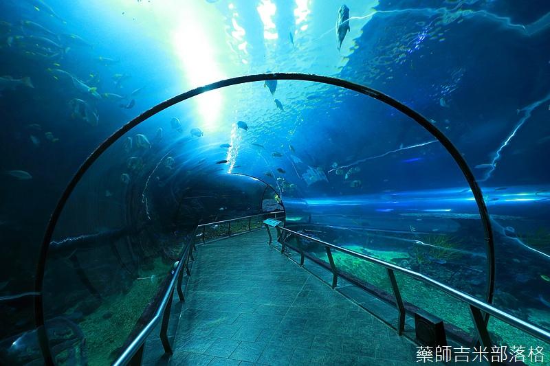Aquarium_694.jpg