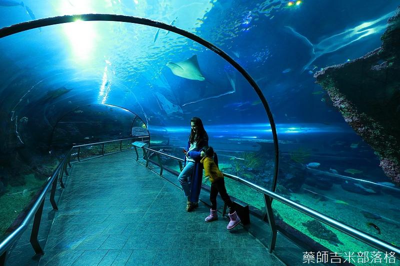 Aquarium_698.jpg