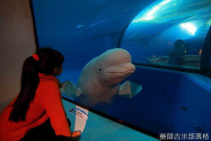 Aquarium_716.jpg
