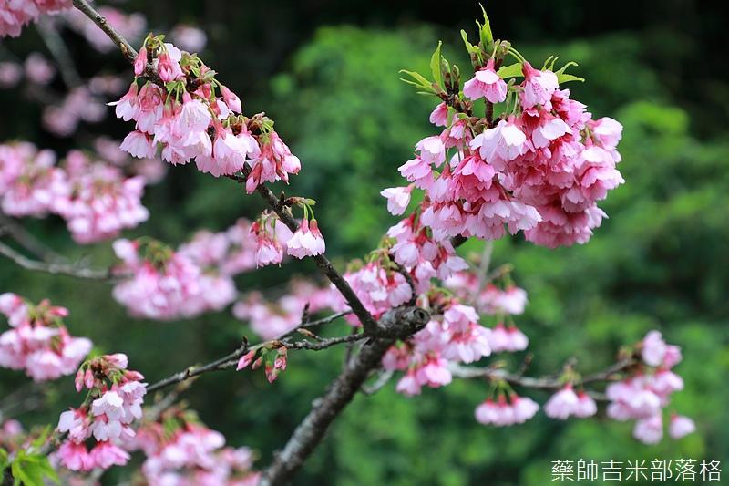 Okinawa_1801_0447.jpg