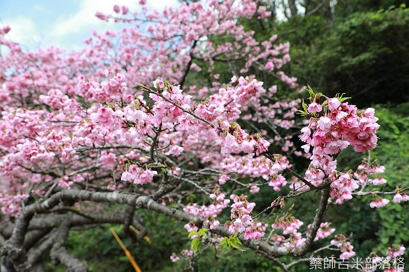 Okinawa_1801_0450.jpg