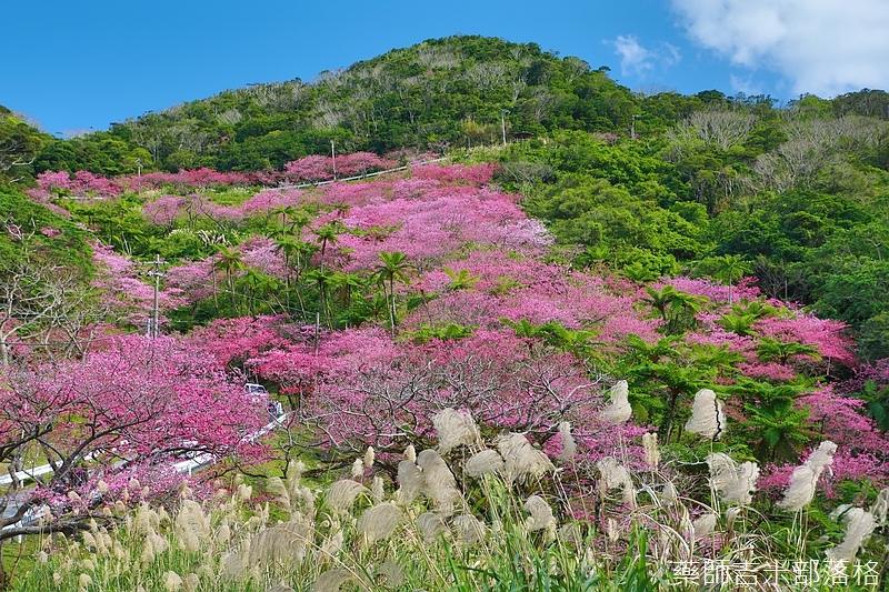Okinawa_1801_0548.jpg