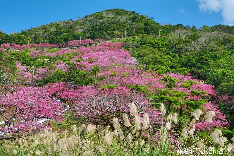 Okinawa_1801_0556.jpg