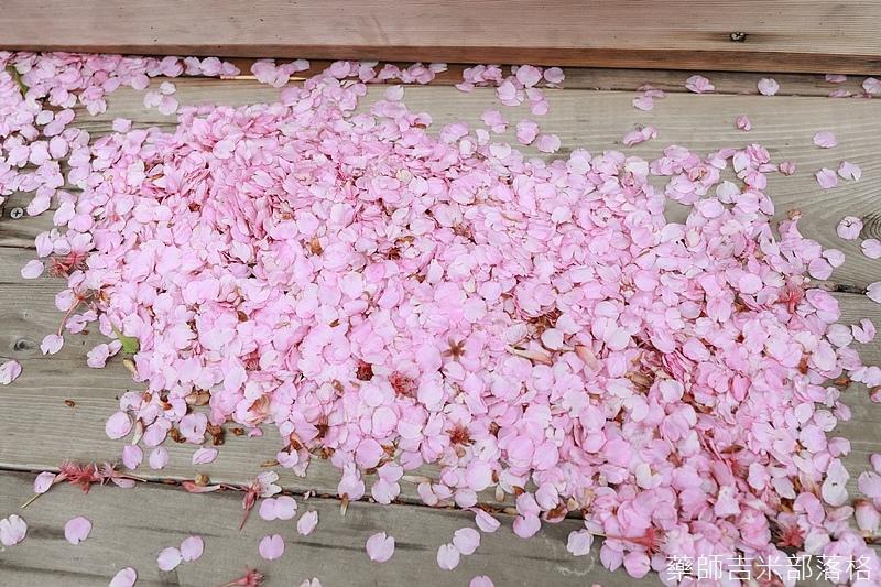 Kanagawa_180306_025.jpg