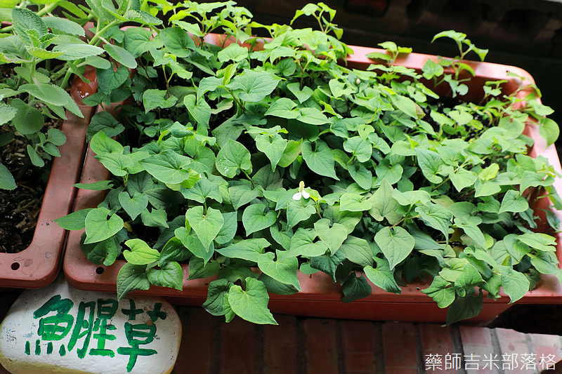 Taiwan_1908_510.jpg