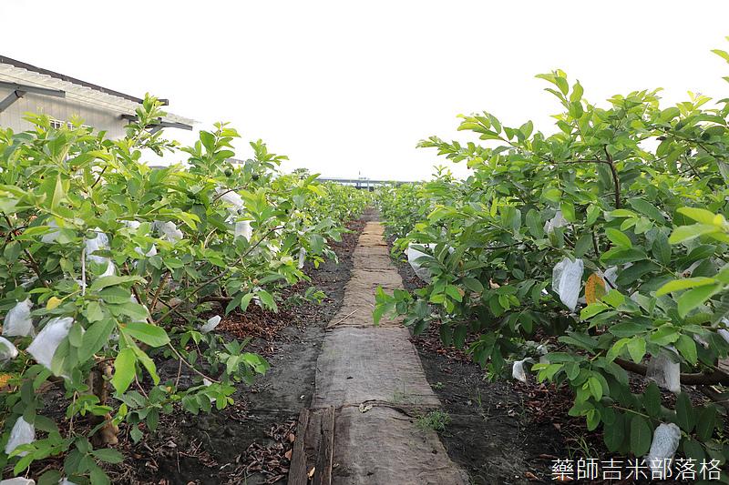 Taiwan_1908_549.jpg