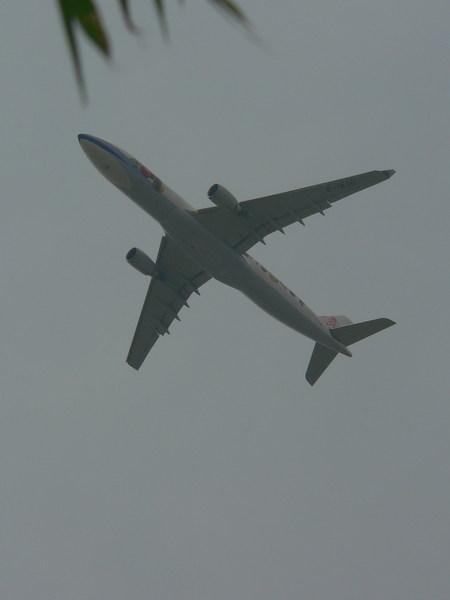 每次來觀音賞蓮常可見飛機