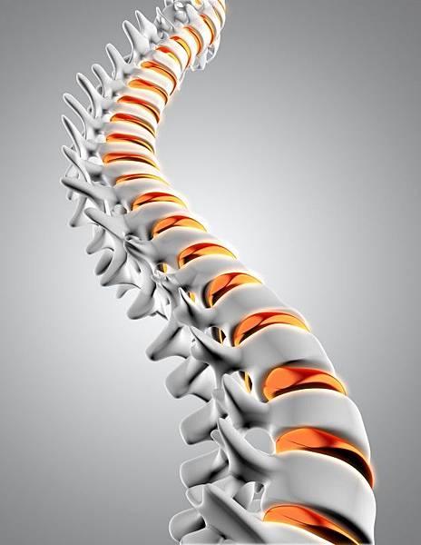 3d-spine_1048-4916.jpg