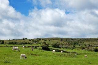 poulnabrone-pasture-beautiful_19-135424.jpg