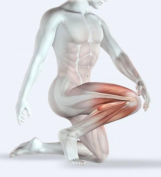 the-human-body-the-knee_1048-4906.jpg