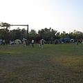 草皮營位.JPG