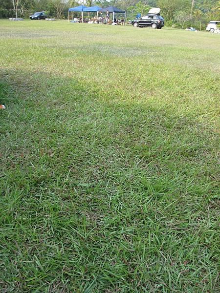 漂亮的草皮.JPG
