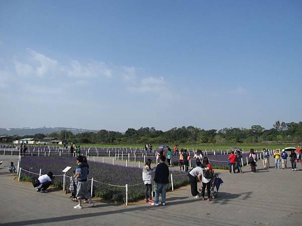 紫色虹彩.JPG