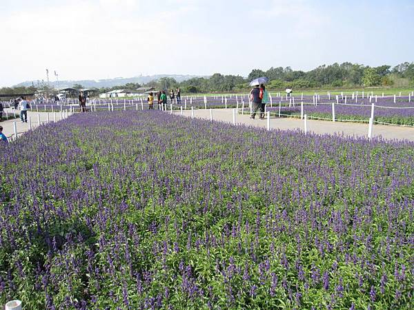 紫色虹彩 (1).JPG