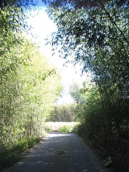 13竹林隧道.JPG