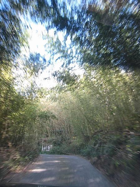 14竹林隧道.JPG