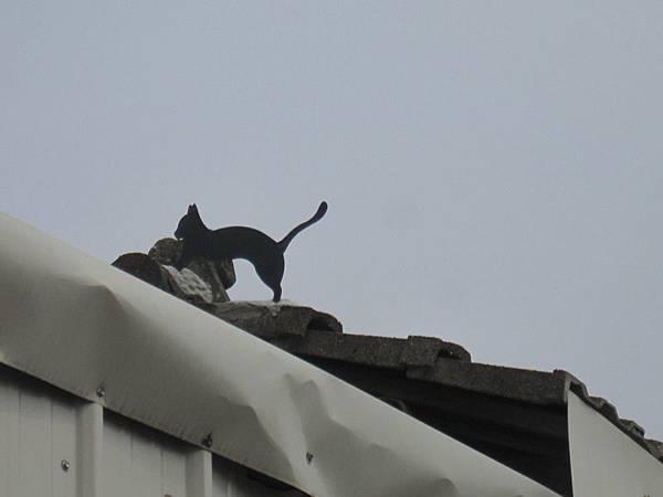 屋頂上的貓-頂溪社區 (24).JPG