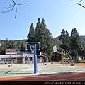 阿里山櫻花季2014 (190).JPG
