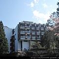 阿里山櫻花季2014 (230).JPG