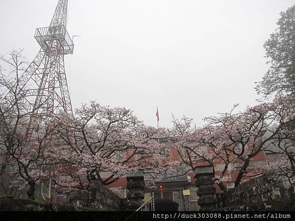 阿里山櫻花季2014 (329).JPG