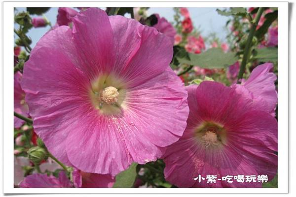 學甲-光華社區 (11).jpg