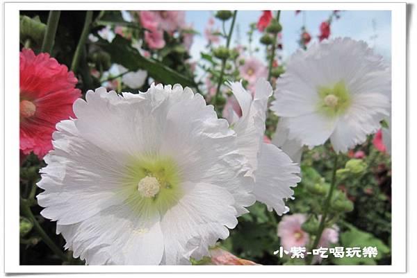 學甲-光華社區 (23).jpg