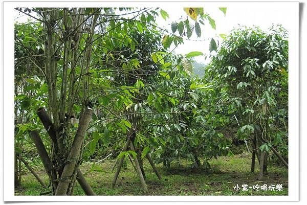 小半天後花園露營區 (86).jpg