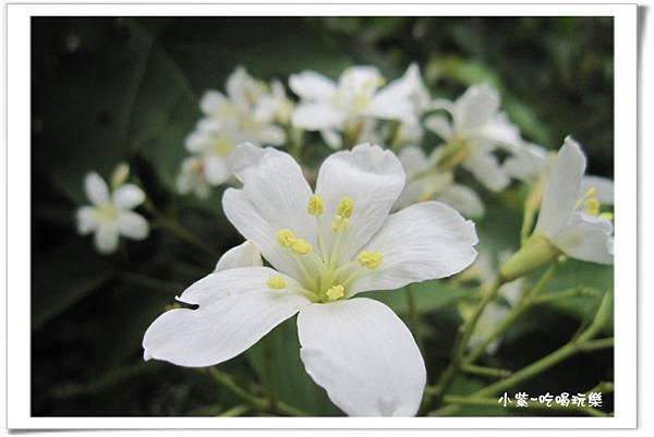 小半天-半天橋 (19).jpg