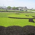2014.06.13苑裡-彩繪稻田 (7).jpg