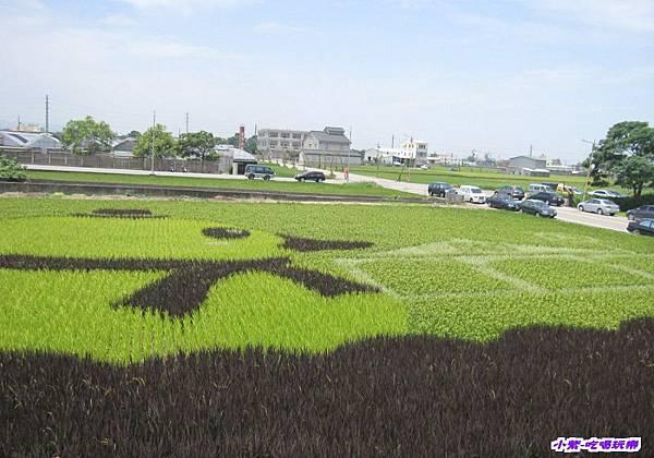 2014.06.13苑裡-彩繪稻田 (8).jpg
