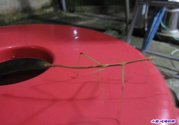 竹節蟲1.jpg