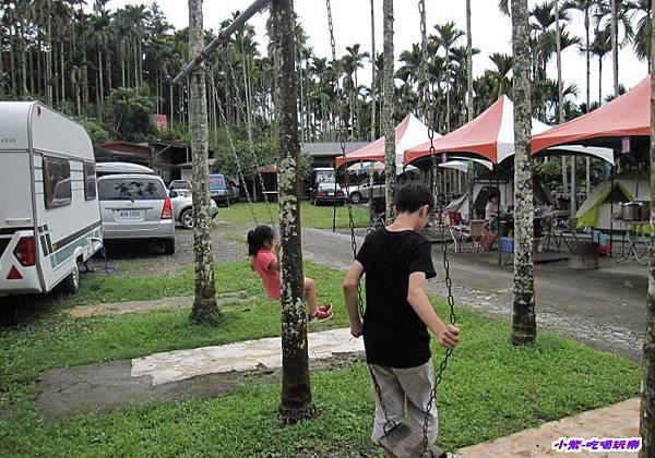 檳榔樹盪鞦韆.jpg