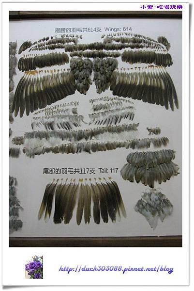集集特有生物研究中心 (76).jpg