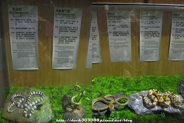 毒蛇 .jpg