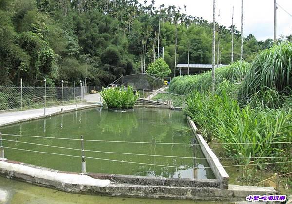 釣魚池.jpg