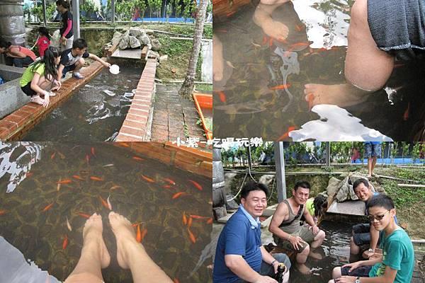 魚兒吃角質.jpg