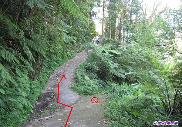 往梅后蔓瀑布步下坡步道.jpg