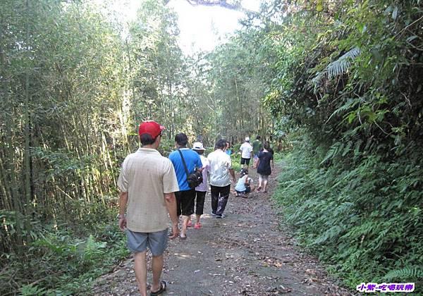 往梅后蔓瀑布步下坡步道 (2).jpg
