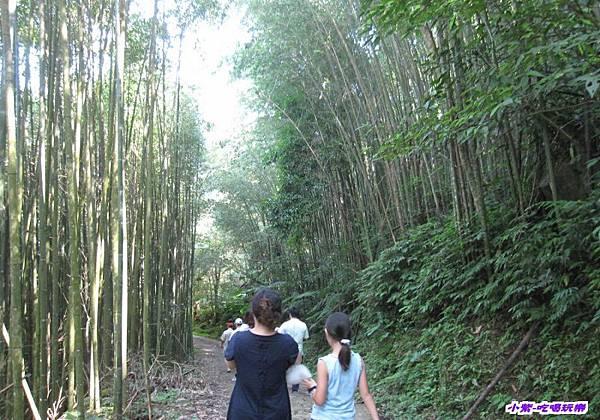 往梅后蔓瀑布步下坡步道 (3).jpg