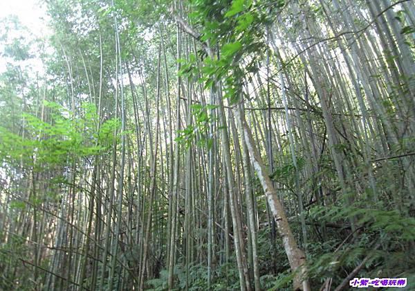 往梅后蔓瀑布步下坡步道 (5).jpg