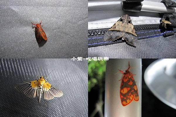 昆蟲1.jpg