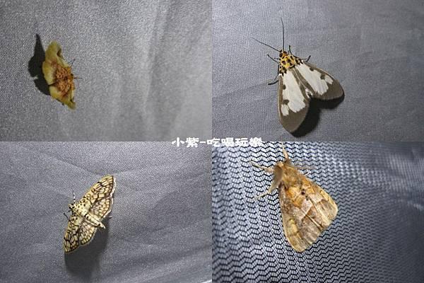 昆蟲2.jpg