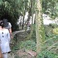 竹林步道 (2).jpg