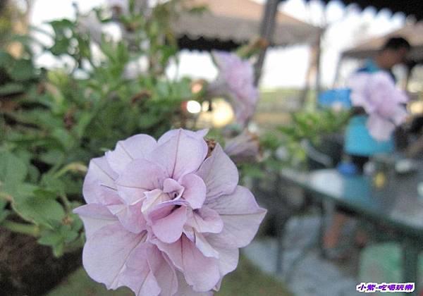 庭園一景.jpg