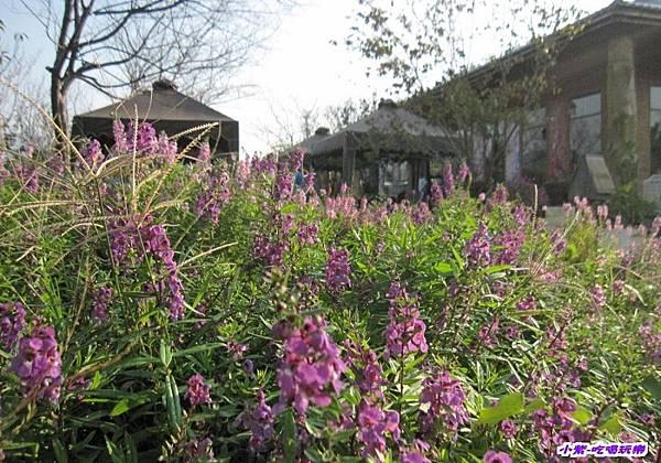 庭園一景 (2).jpg