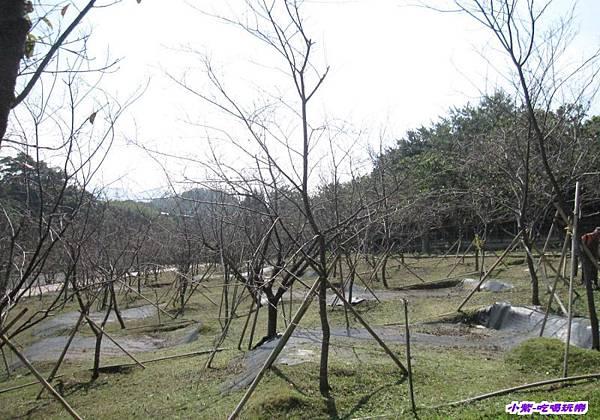 櫻花區.jpg
