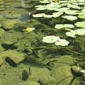 生態池.jpg