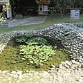 生態池 (1).jpg