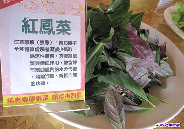 紅鳳菜.jpg