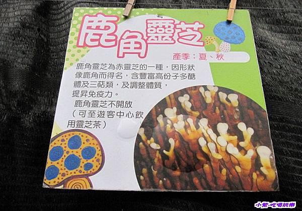 豐年生態農場 (11).jpg
